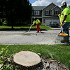 Rob Winner – rwinner@shawmedia.com<br /> <br /> Village of Plainfield public works employees T.J. Countryman (front) and Brian Fahnstrom clean up debris on Partridge Drive in Plainfield after removing an ash tree on Wednesday, July 16, 2014.