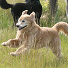 John Patsch-For Shaw Media<br /> Dogs enjoy a romp at the new dog park at the Rock Run Access on McClintock Road.