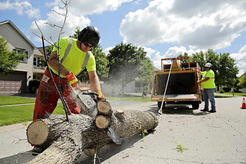 Rob Winner – rwinner@shawmedia.com<br /> <br /> Village of Plainfield public works employee Brian Fahnstrom uses a chainsaw to trim the trunk of an ash tree that was removed on Partridge Drive in Plainfield Wednesday, July 16, 2014.