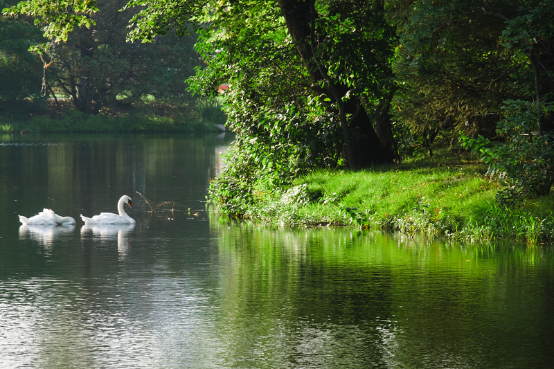 ISU Swans