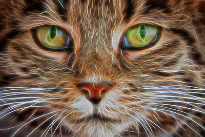 Piercing Eyes - Honorable Mention