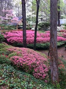 Forest Garden Club/Visit to the Nash Gardens