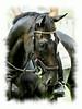 Rider #32