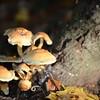 Mushrooms Fall 2014-007