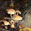 Mushrooms Fall 2014-004
