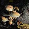 Mushrooms Fall 2014
