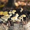 Mushrooms Fall 2014-012