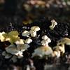 Mushrooms Fall 2014-016