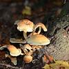 Mushrooms Fall 2014-005