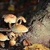 Mushrooms Fall 2014-008
