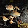 Mushrooms Fall 2014-001