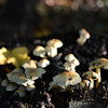 Mushrooms Fall 2014-015