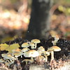 Mushrooms Fall 2014-009