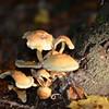 Mushrooms Fall 2014-006