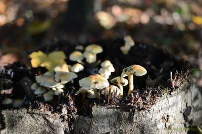 Mushrooms Fall 2014-013