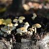 Mushrooms Fall 2014-013