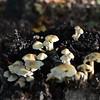 Mushrooms Fall 2014-019