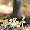 Mushrooms Fall 2014-010