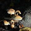 Mushrooms Fall 2014-003