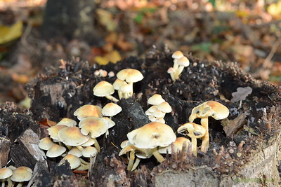 Mushrooms Fall 2014-023