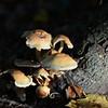 Mushrooms Fall 2014-002
