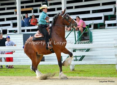 Friday - Heavy Horses / Light Horses / Ponies