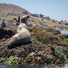 20140510211-Two Harbors Sea Kayaking, Catalina
