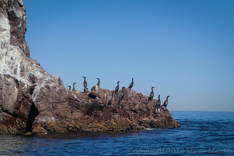 20140510011-Two Harbors Sea Kayaking, Catalina