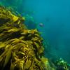 20140510037-Two Harbors Sea Kayaking, Catalina