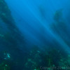 20140510033-Two Harbors Sea Kayaking, Catalina
