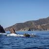 20140510029-Two Harbors Sea Kayaking, Catalina