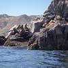 20140510026-Two Harbors Sea Kayaking, Catalina