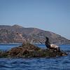 20140510201-Two Harbors Sea Kayaking, Catalina