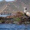 20140510209-Two Harbors Sea Kayaking, Catalina