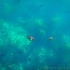 20140510043-Two Harbors Sea Kayaking, Catalina