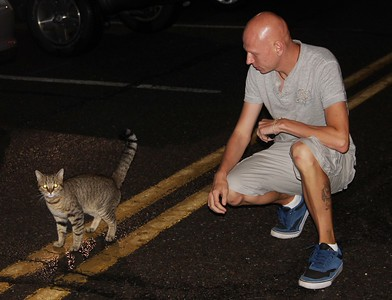 Stray Cat, Eric, by Bridge, East Broad Street, Tamaqua (7-23-2014)