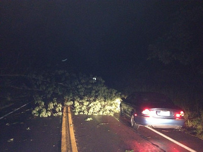 Tree Down Near Mauch Chunk Lake, Summit Hill, from Angela Nardini, Jim Thorpe (7-23-2014)