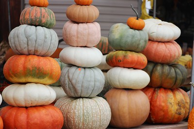 Pumpkins, Dunn's Farm, South Tamaqua (9-20-2014)