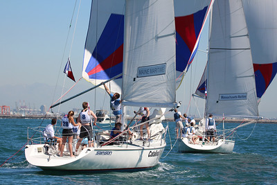 Harbor cup-1272