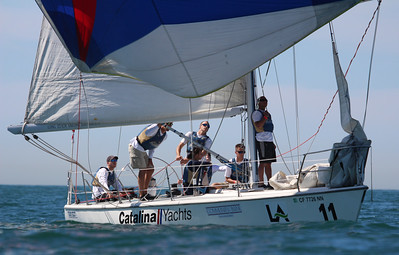 Harbor cup-1603