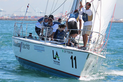 Harbor cup-1242
