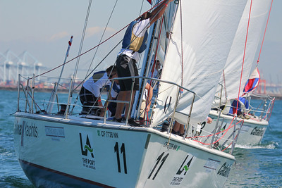 Harbor cup-1241