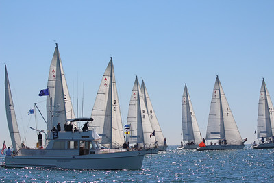 Harbor cup-1098