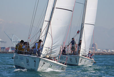 Harbor cup-1181