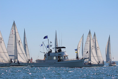 Harbor cup-1089