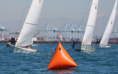 Harbor cup-1147