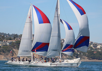 Harbor cup-1290