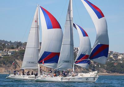 Harbor cup-1290