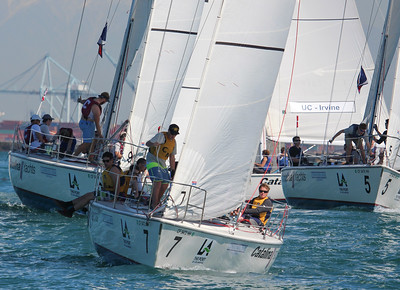 Harbor cup-1172
