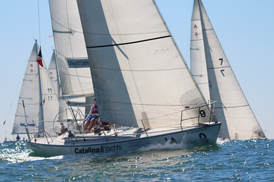 Harbor cup-1117